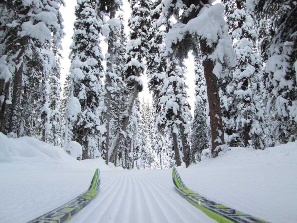 Fairview trail. Photo Bob Truman